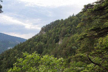 Primary forest remnant Kundracka is located on the steep slopes of Perusin Mountain, side ridge in the Lubochnianska valley. The forest type, found here on extremely steep and rocky slopes, is mostly Scotch pine (Pinus sylvestris)– dominated forest.