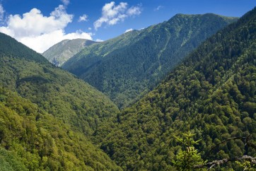 "Fantastic Boia Mica Valley in Fagaras Natura 2000: after years of struggle with bureaucracy, the valley is finally included in the ""National Catalog of Virgin Forests"".  Photo: Matthias Schickhofer."